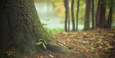 Both cremations and burials contribute to the huge environmental impacts of funerals.